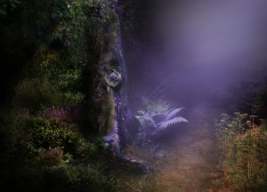 Magical Night Forest Background