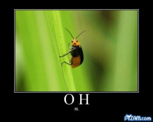 Hello bugg